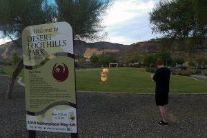 Pokemon Desert Foothills park ahwatukee